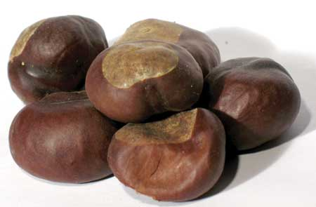 Bulk Buckeyes whole