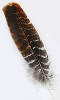 Turkey Wing feather shorts